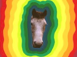 mylittlehorse